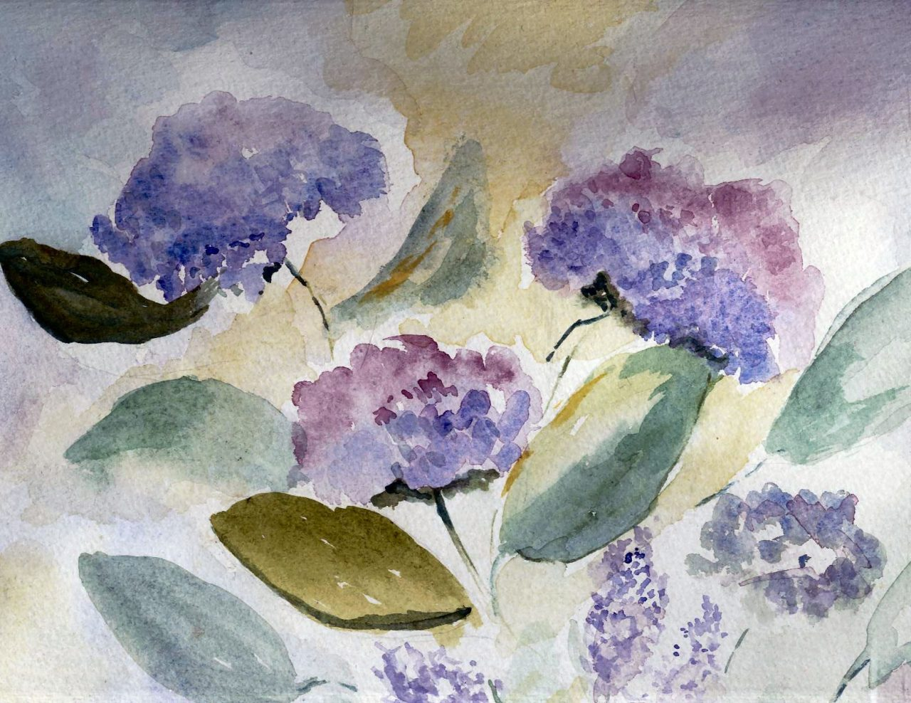 Hydrangeas in the Wind