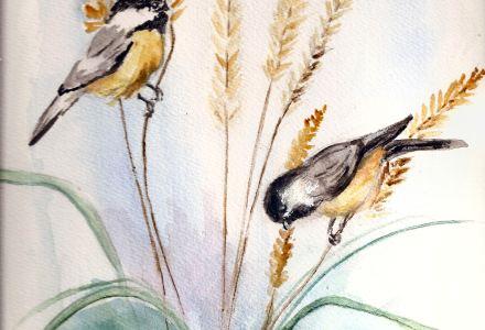 Chickadees